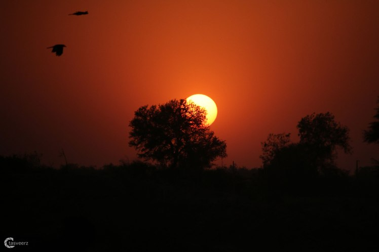 sunset_sindhrot